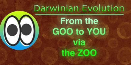 The Goo