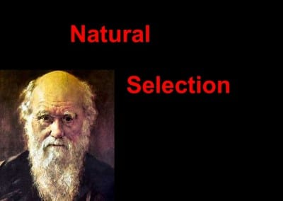 What is the Nightmare Scenario for Darwinism?