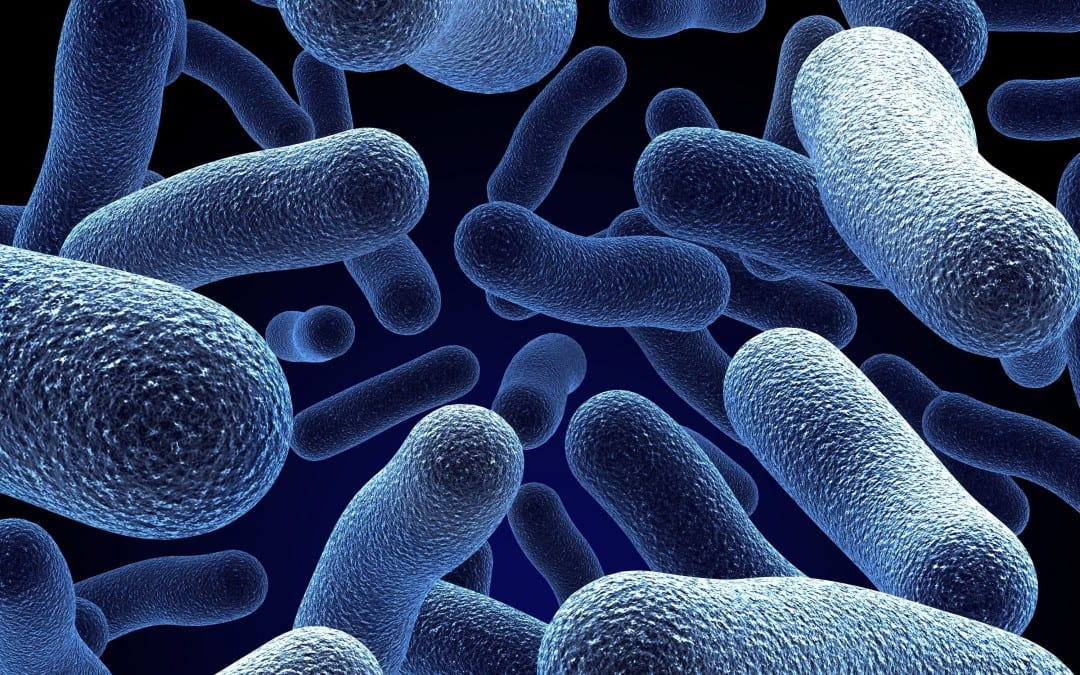 Cells Go to Extraordinary Lengths